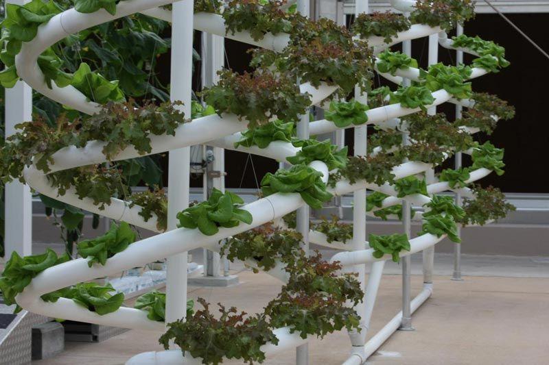 Diy vertical pvc planter hydroponic growing organic