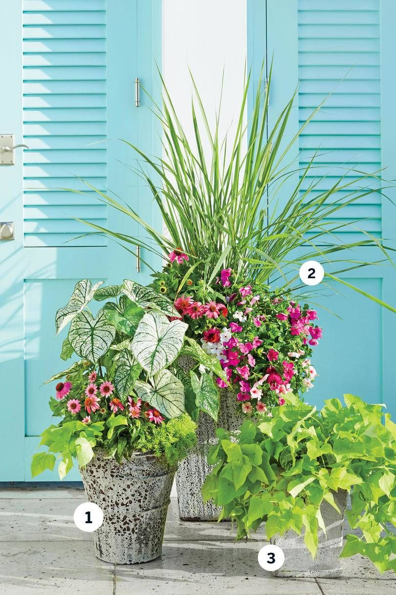 3 Florida Inspired Container Gardens is part of Container garden Porch - We visited the lush Florida Panhandle and brought home three of their best planting ideas