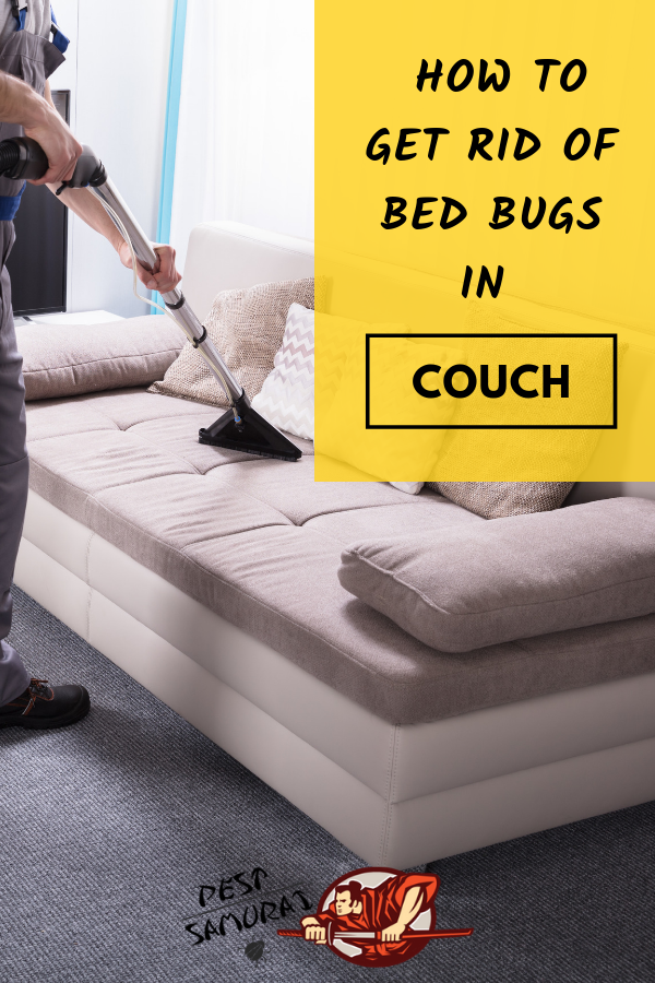 How To Get Rid Of Bed Bugs In Couch Easy Instructions Rid Of