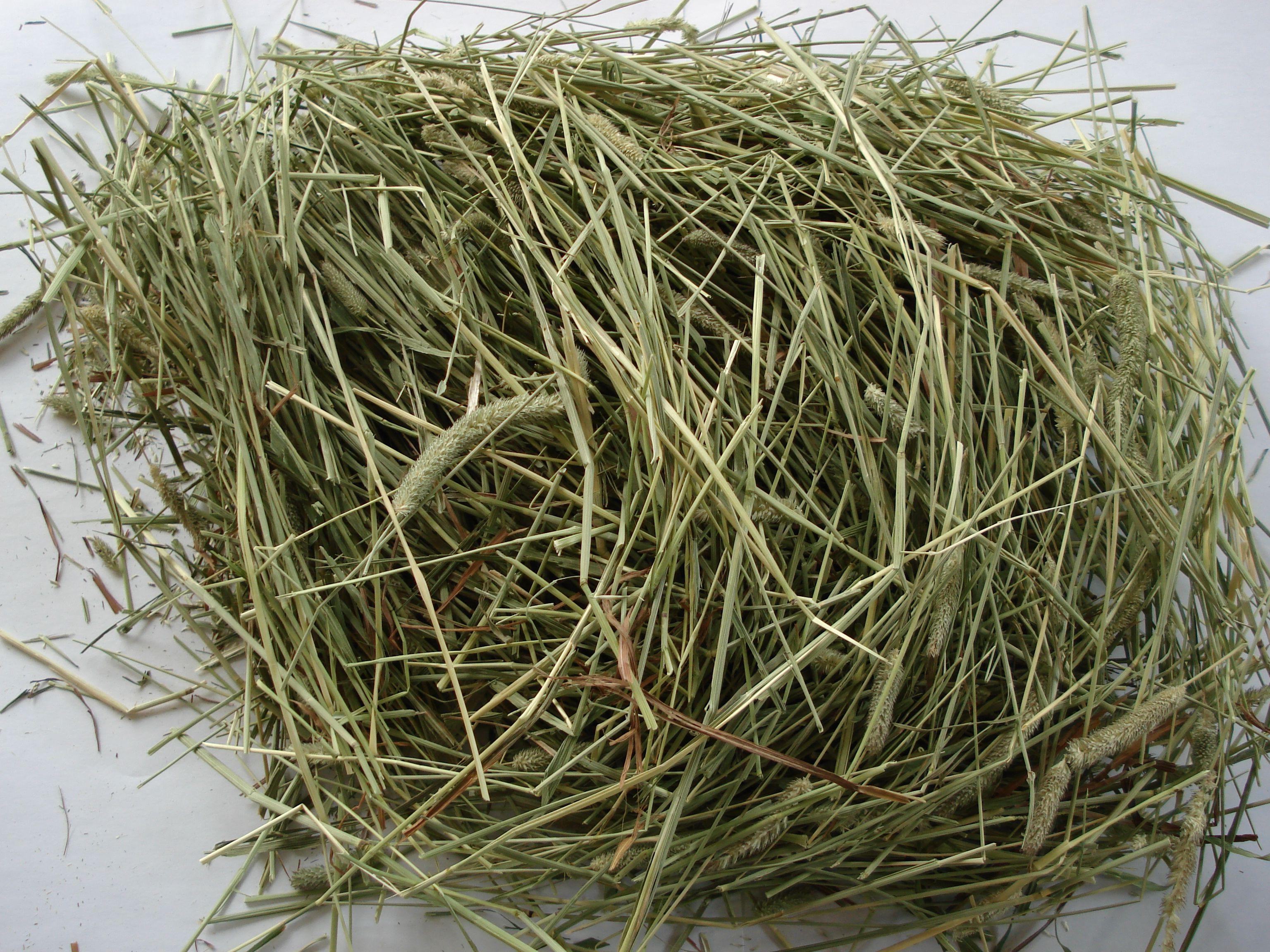 того, бобовое сено фото дом реализован соответствии