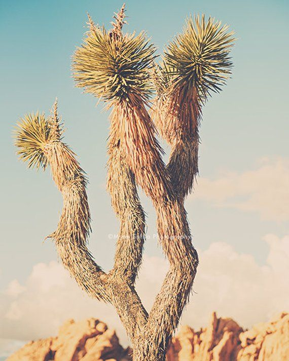 desert decor, yucca tree print, Joshua Tree photography, Southwestern bedroom art, California nurser is part of bedroom Art Photography - InkPaperCameraAll photographs are taken & processed by me   © Myan Soffia Photography