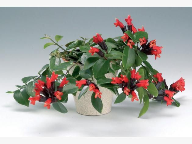 Pflanzen Für Dunkle Ecken 11 zimmerpflanzen für dunkle ecken zimmerpflanzen