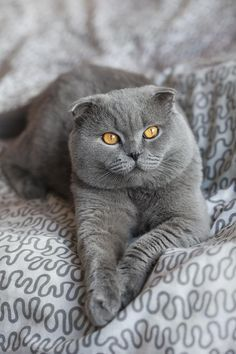 Good Morning Happyday Baby Katzen Katzen Tiere