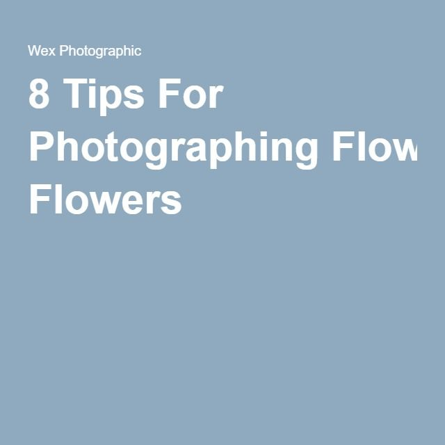 8 Tips For Photographing Flowers
