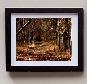 Into the Woods, Metallic Autumn Woodland Photography Print, 11x14 Inch, Free Shipping. $33.00, via Etsy.