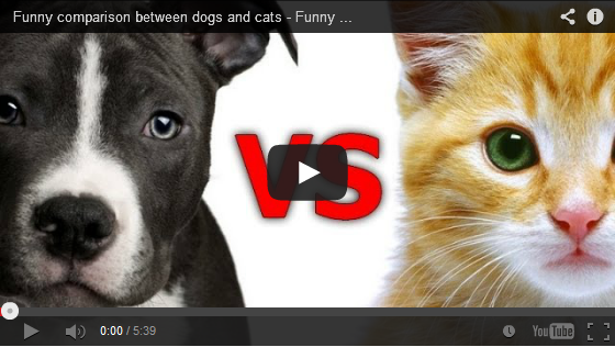The Difference Between Dogs And Cats Funny cats in water
