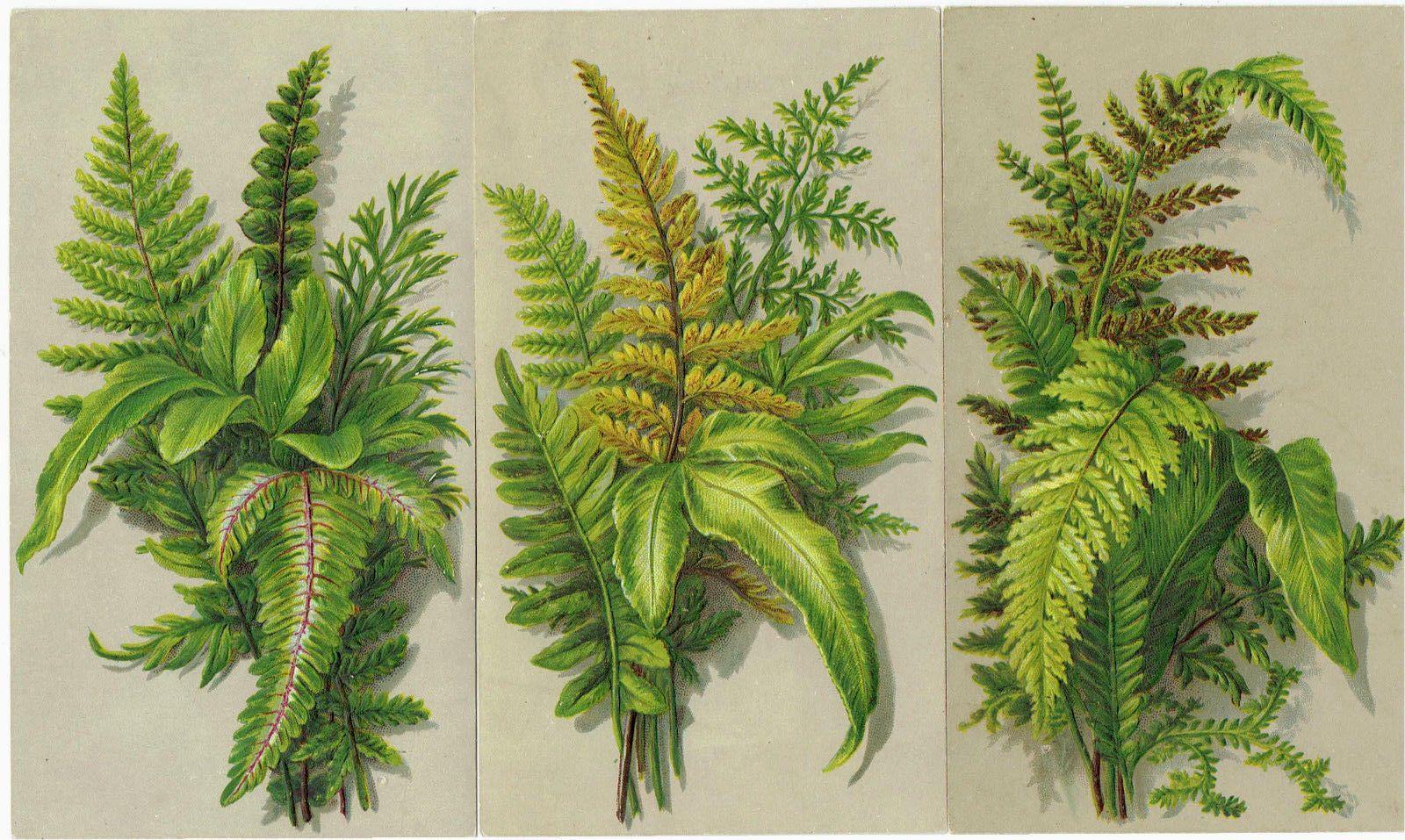 3 x victorian christmas greetings card ferns embossed