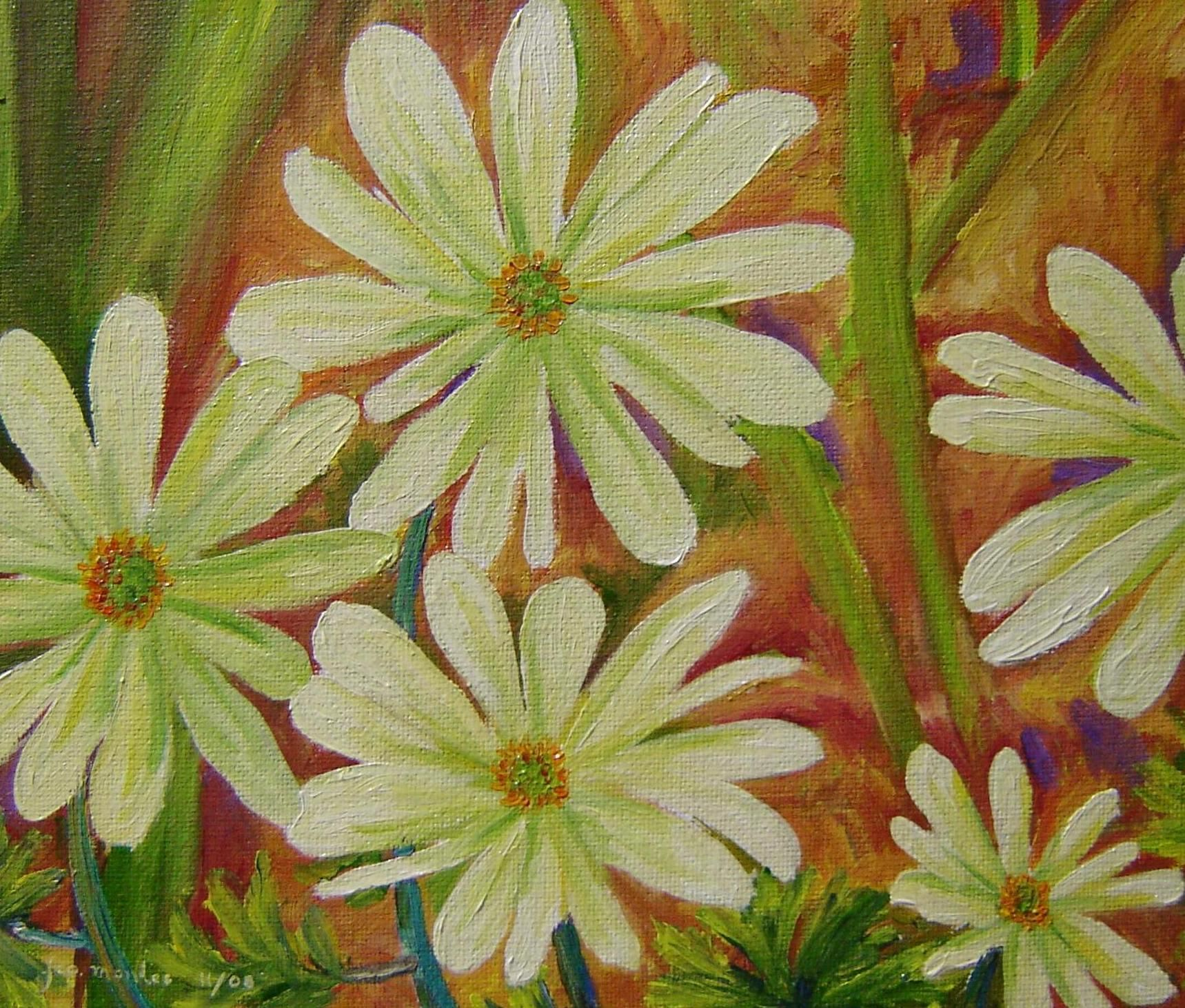 Anemonas blancas