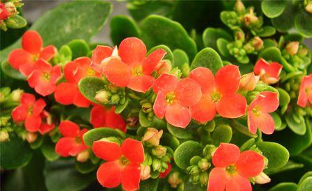 Plantas de interior resistentes cultivos y plantas for Plantas decorativas resistentes
