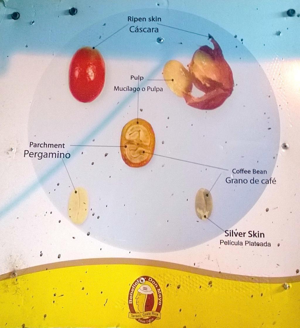 Today\'s #coffee anatomy | KÁVA ☕ CAFE ☕ COFFEE ☕ KAFFEE ☕ KAHVI ...