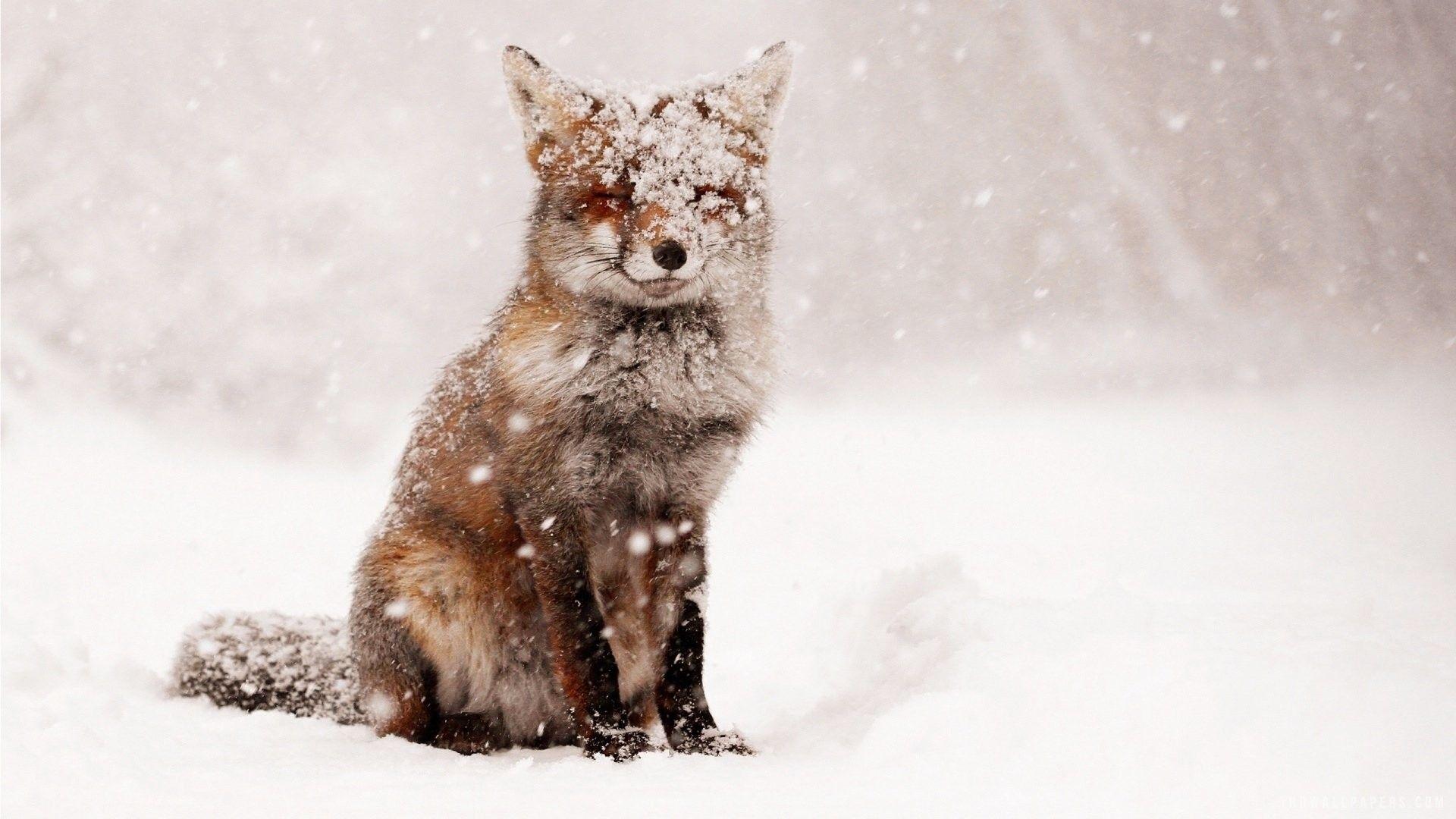 48 Cute Winter Animal Wallpaper Background Photos Hd Images Winter Animals Animals Animal Wallpaper