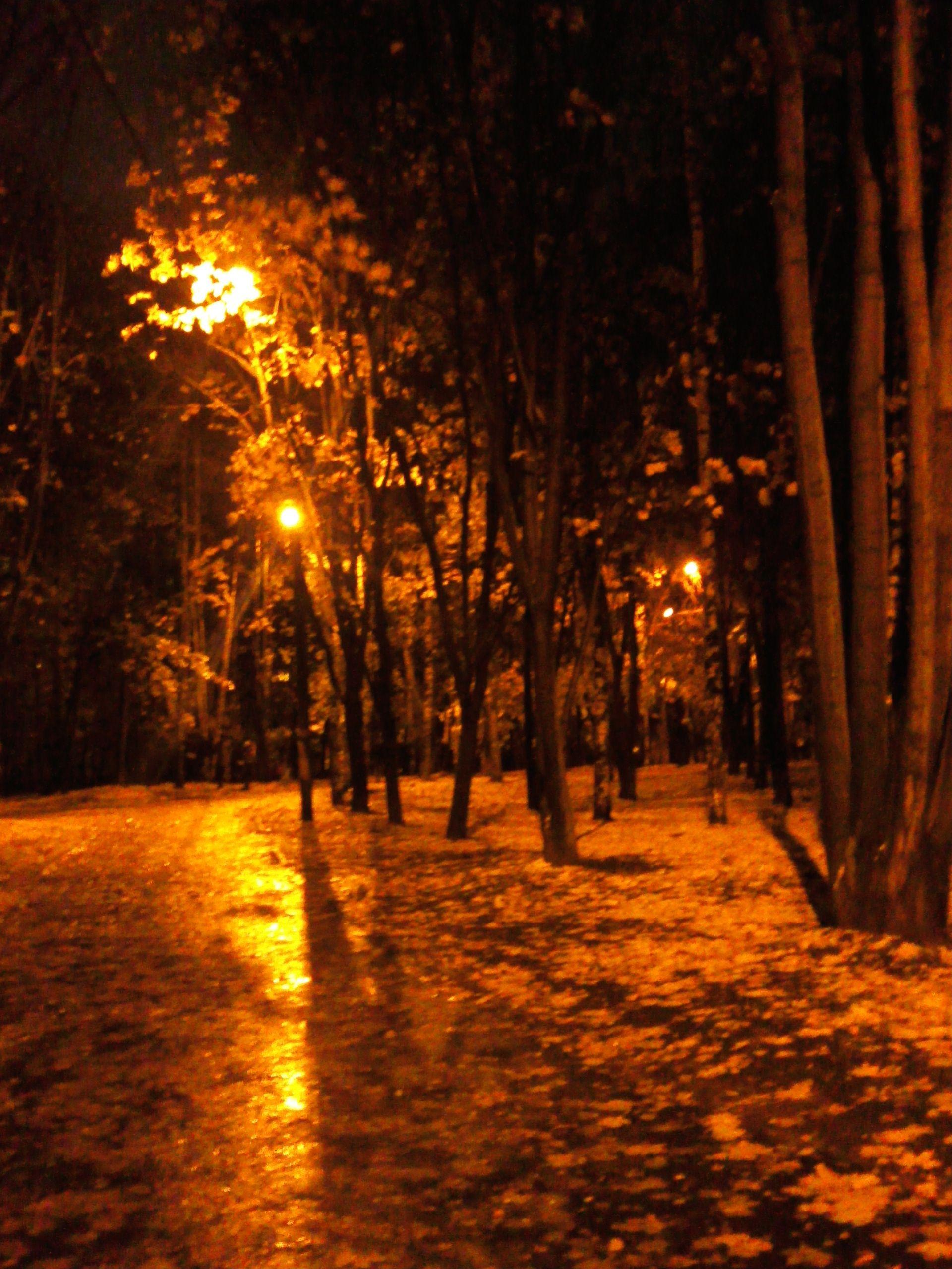 Night. Rain. Autumn. -
