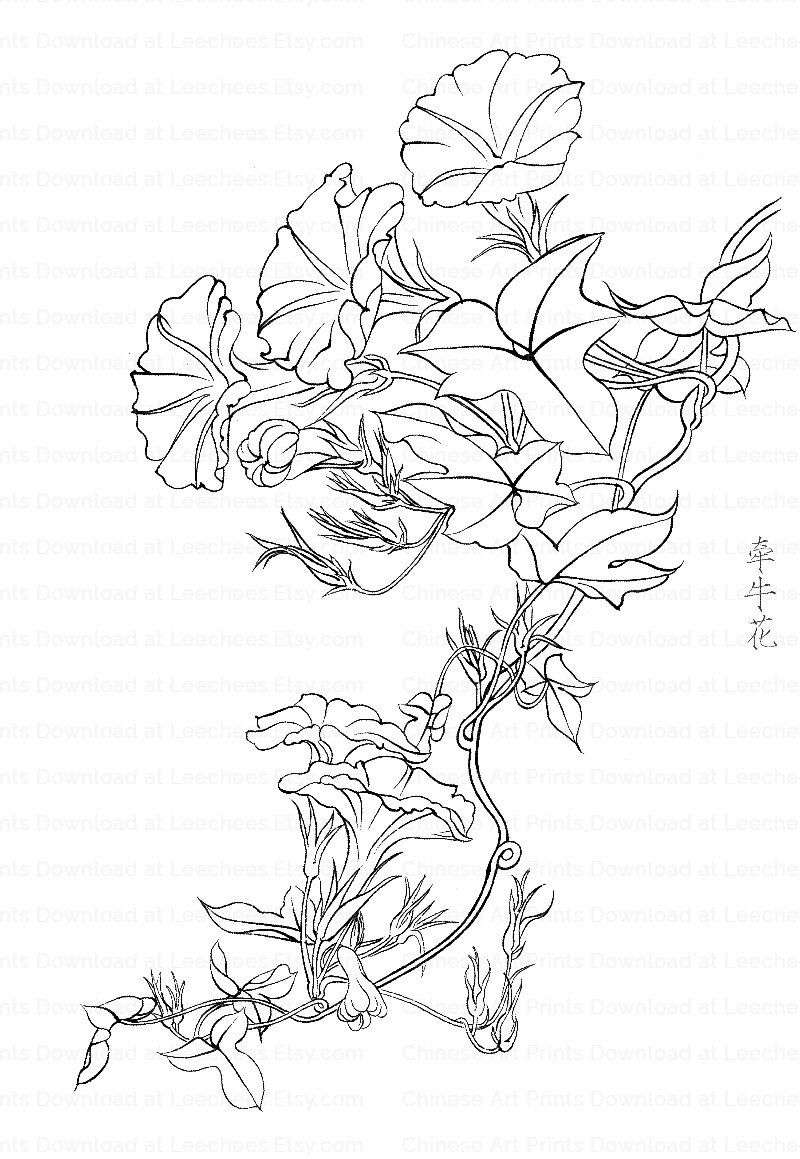 - Morning Glory Flowers, Coloring Page For Adult, Adult Colouring