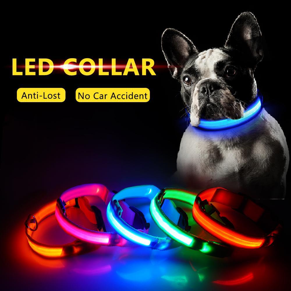 Usb Charging Led Dog Collar In 2020 Led Dog Collar Dog Leads Dog Safety