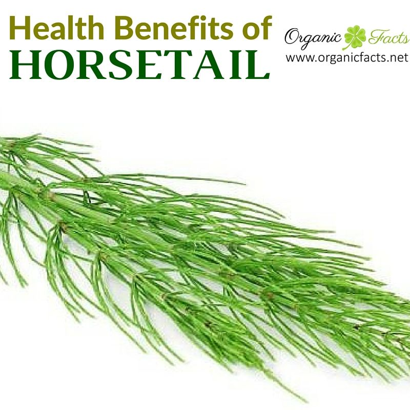 Health Benefits Of Horsetail Include Its Ability To Prevent Certain
