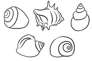 24+ How To Draw Shells, Step by Step, Drawing Guide, by Dawn