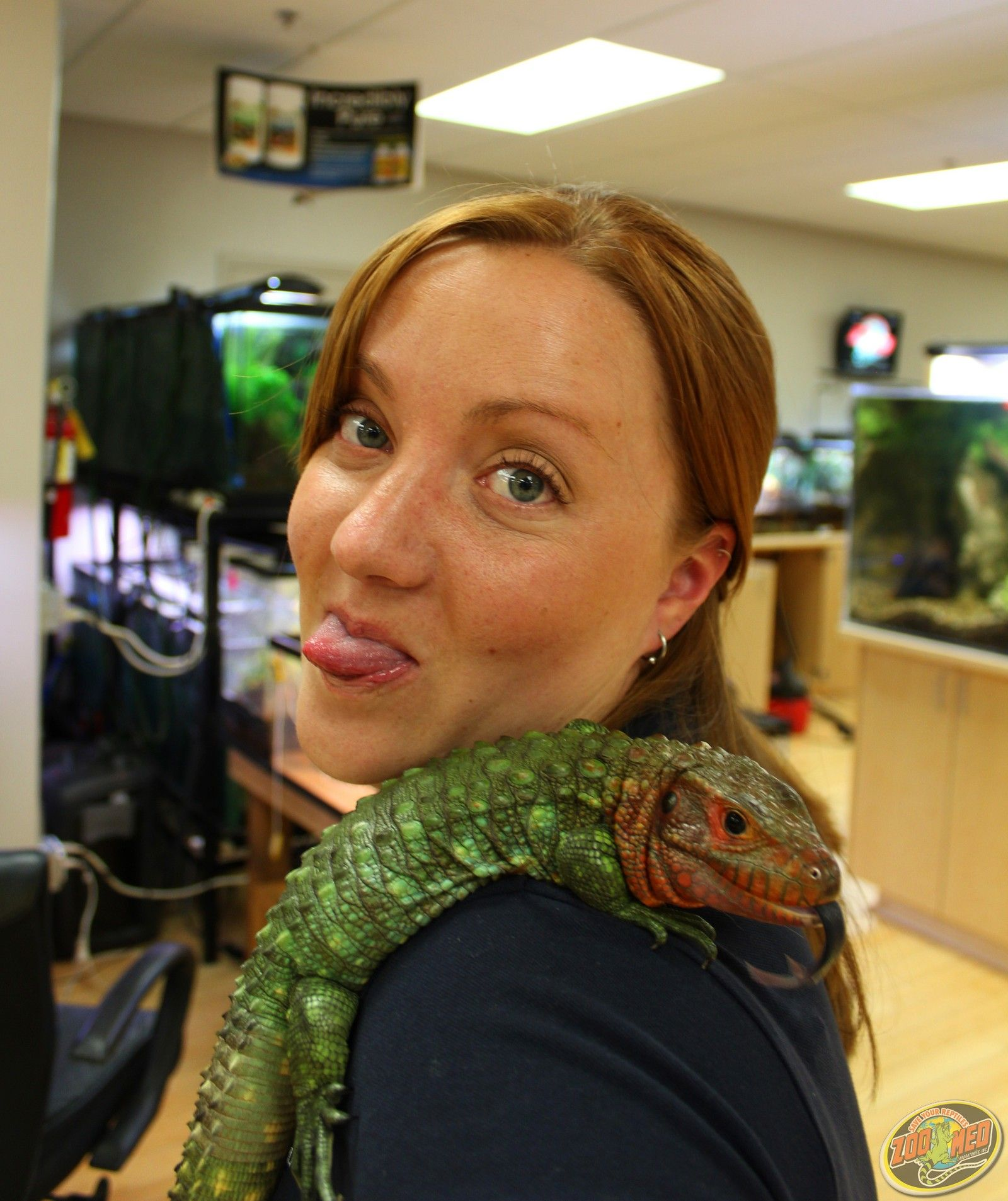 Caiman Lizard, my dream pet. Seriously just as good as it