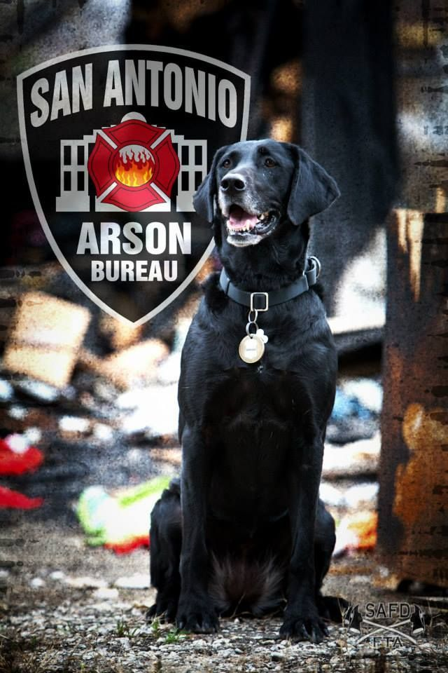 Kai Is The Winner Of The Arson Hero Dog Category At The 2014 Aha Hero Dog Awards Herok9 Dogs Dogs With Jobs American Heroes