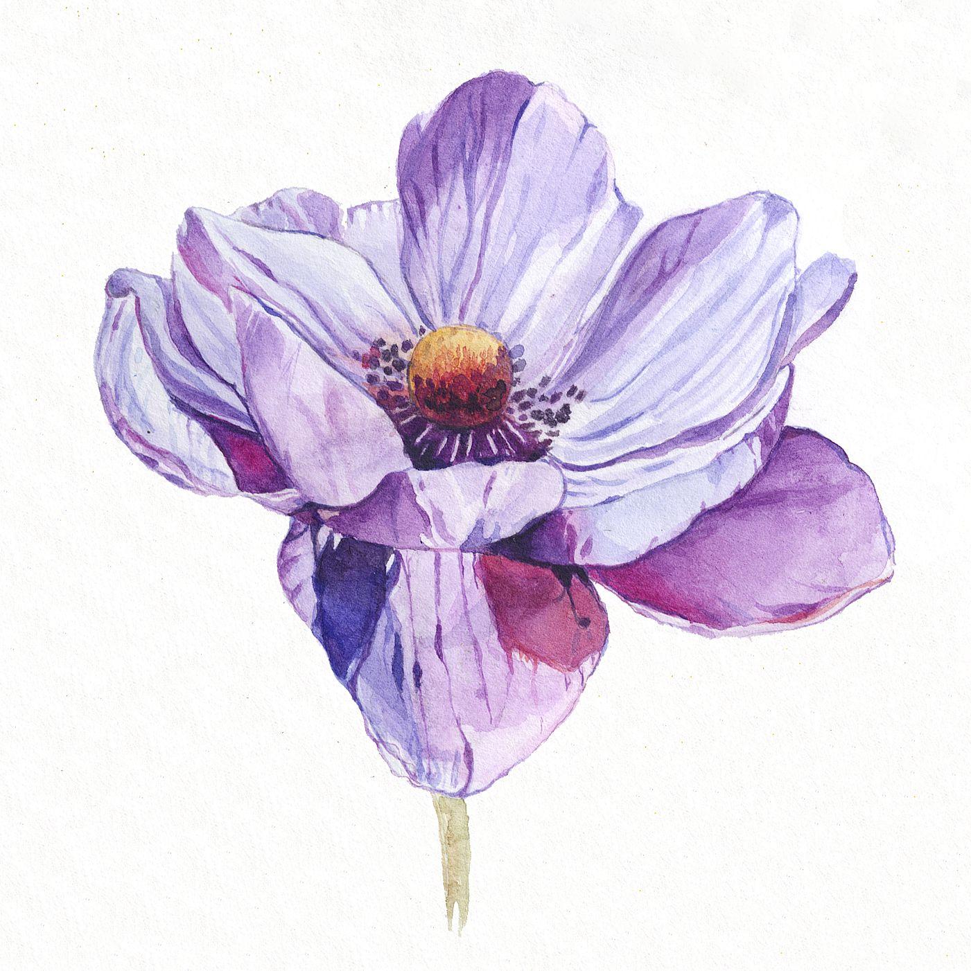 Paint Watercolor Botanical Illustration Botanical Illustration