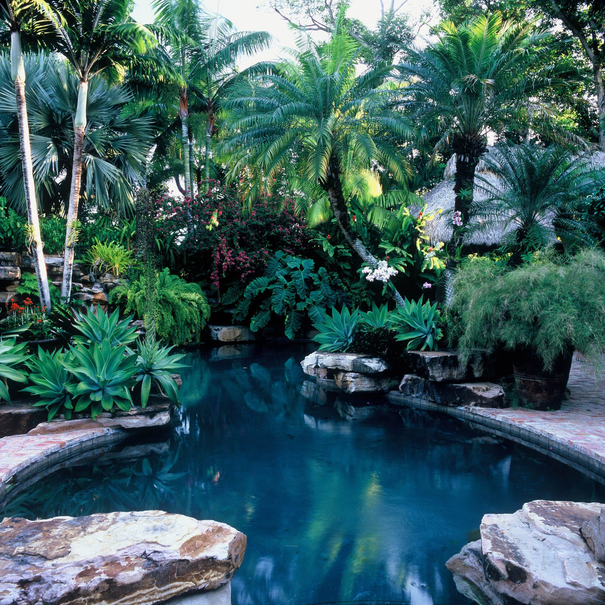 06-Richard Felber Photography-Five Acre Garden #palmtrees #realpalmtrees #buypalmtrees #cool #landscape Realpalmtrees.com