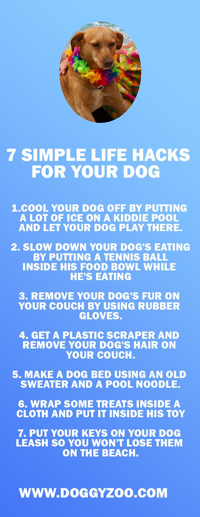 7 Simple Life Hacks for Your Dog