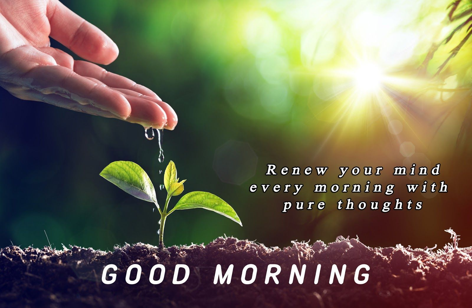 Nature Good Morning Images With Quotes Mirji