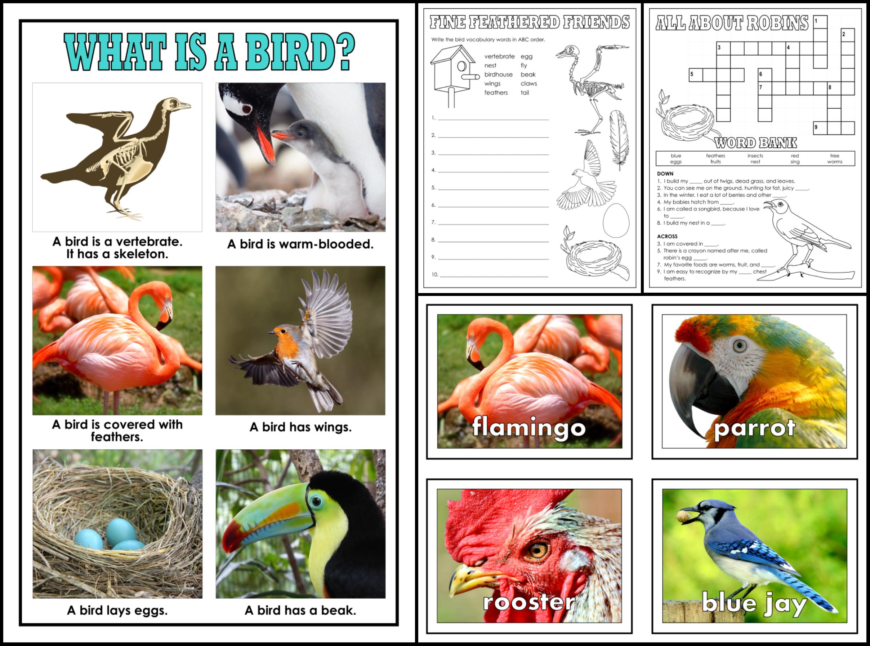 Animal Classes for Grades 1-3: Amazing Animals SUPER Bundle