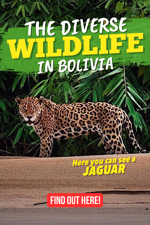 The diverse wildlife in Bolivia Bolivia travel, Bolivia