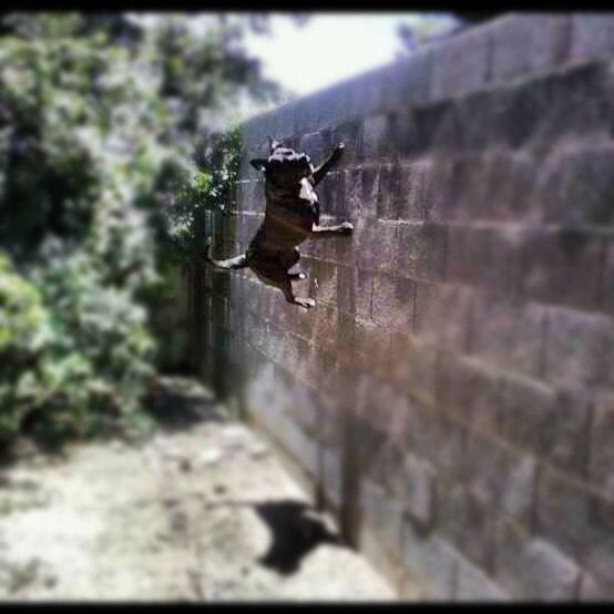 She can climb walls