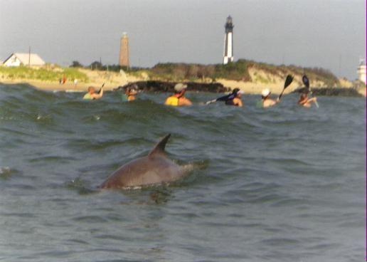 Virginia Beach Kayaking With Dolphins Coastalva