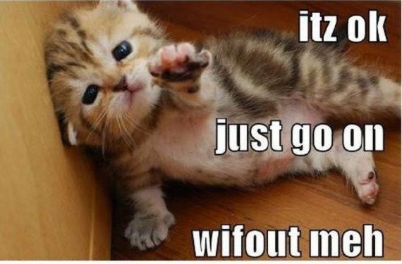 Funny Animal Quotes Funny Animal Pictures With Funny Quotesdoodg Cute Animal Photos Kittens Funny Adorable Cute Animals