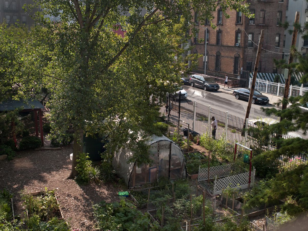 There are more than 100 community gardens in The South Bronx.