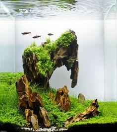 Cool aquascape | Aquarium landscape, Aquascape design ...