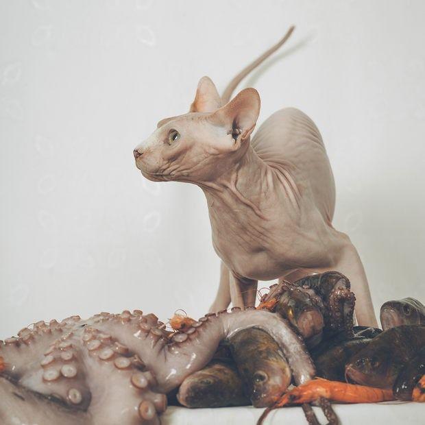 Sphynx by Irma Kanova