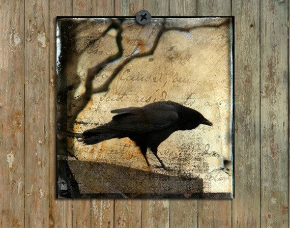 Crow Art Decor Eerie Crow Photograph Gothic Art Pro by gothicrow