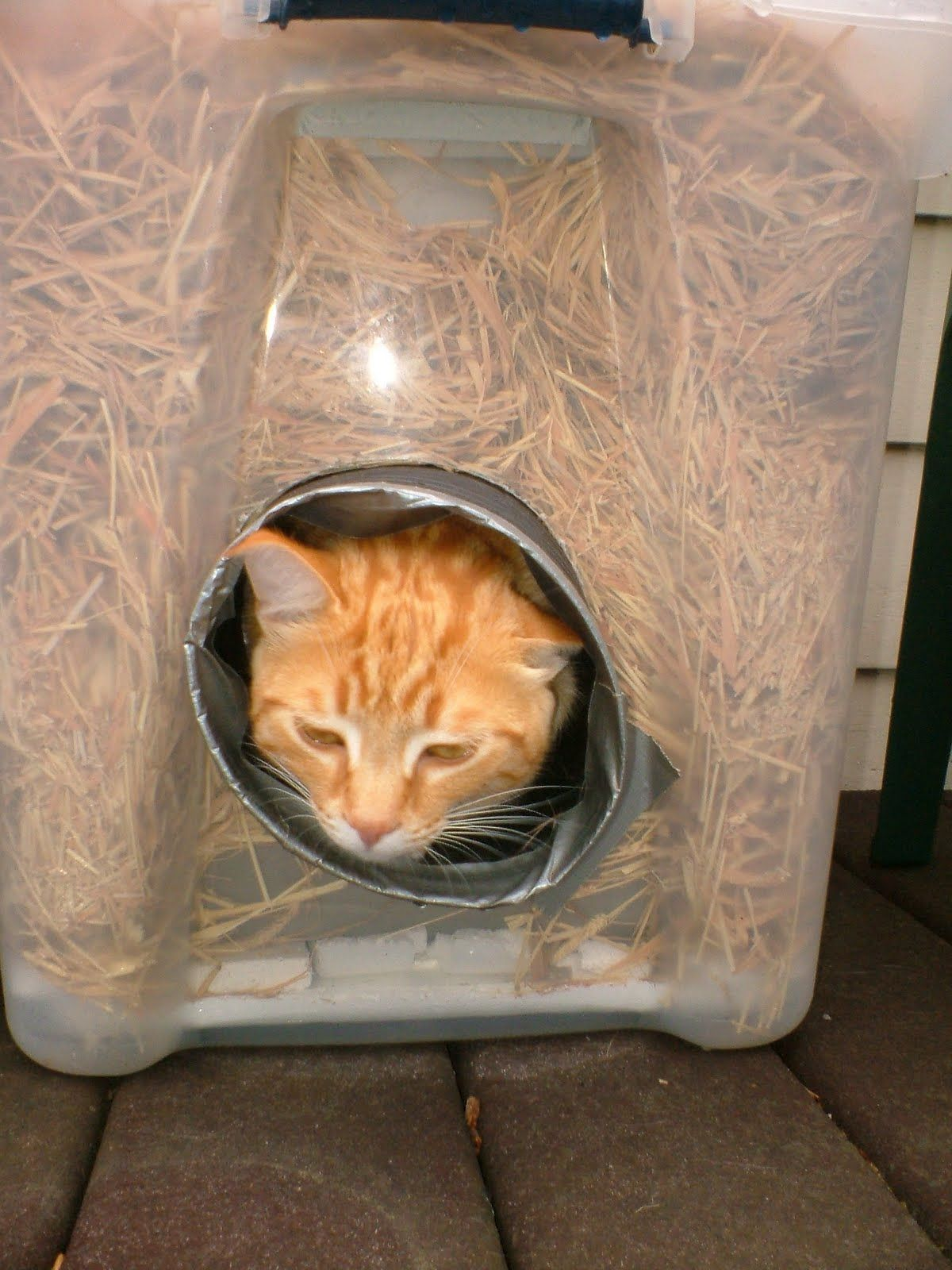 Burrowing in Feral cat shelter, Outdoor cat house