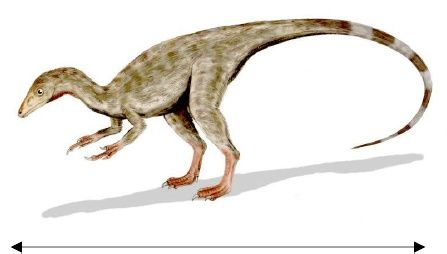 Tipus de dinosaures