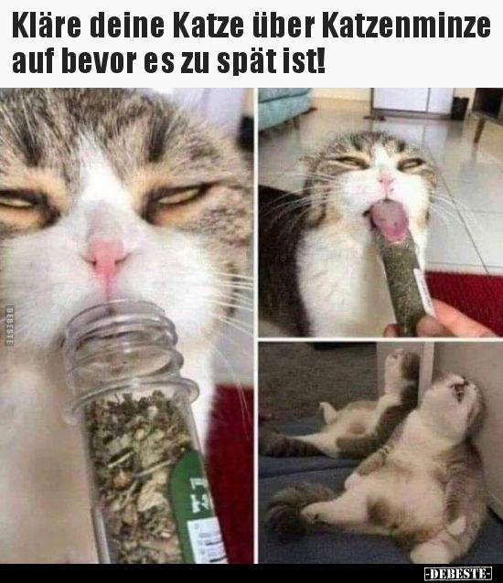 Photo of Informieren Sie Ihre Katze über Katzenminze, bevor es zu spät ist.
