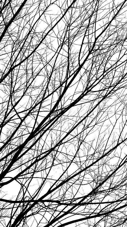 Pin By Persona On Vegetal Patterns In Nature Tree Textures