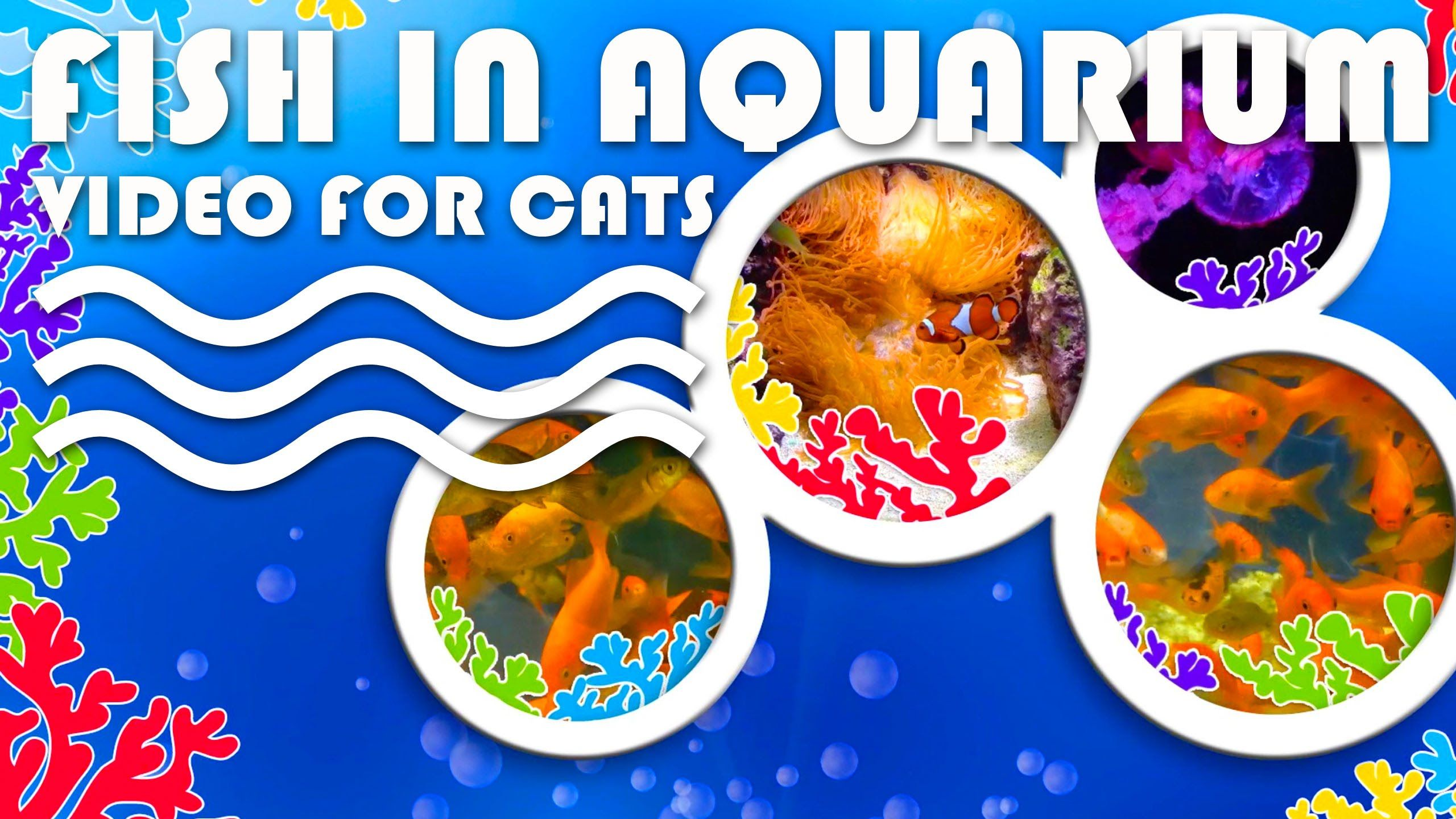 ENTERTAINMENT FOR CATS. Fish in aquarium for cats to watch