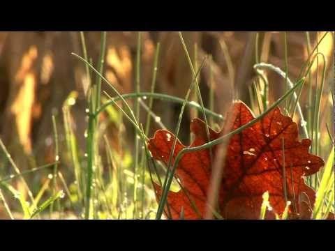 Devendra banhart carmensita lyrics