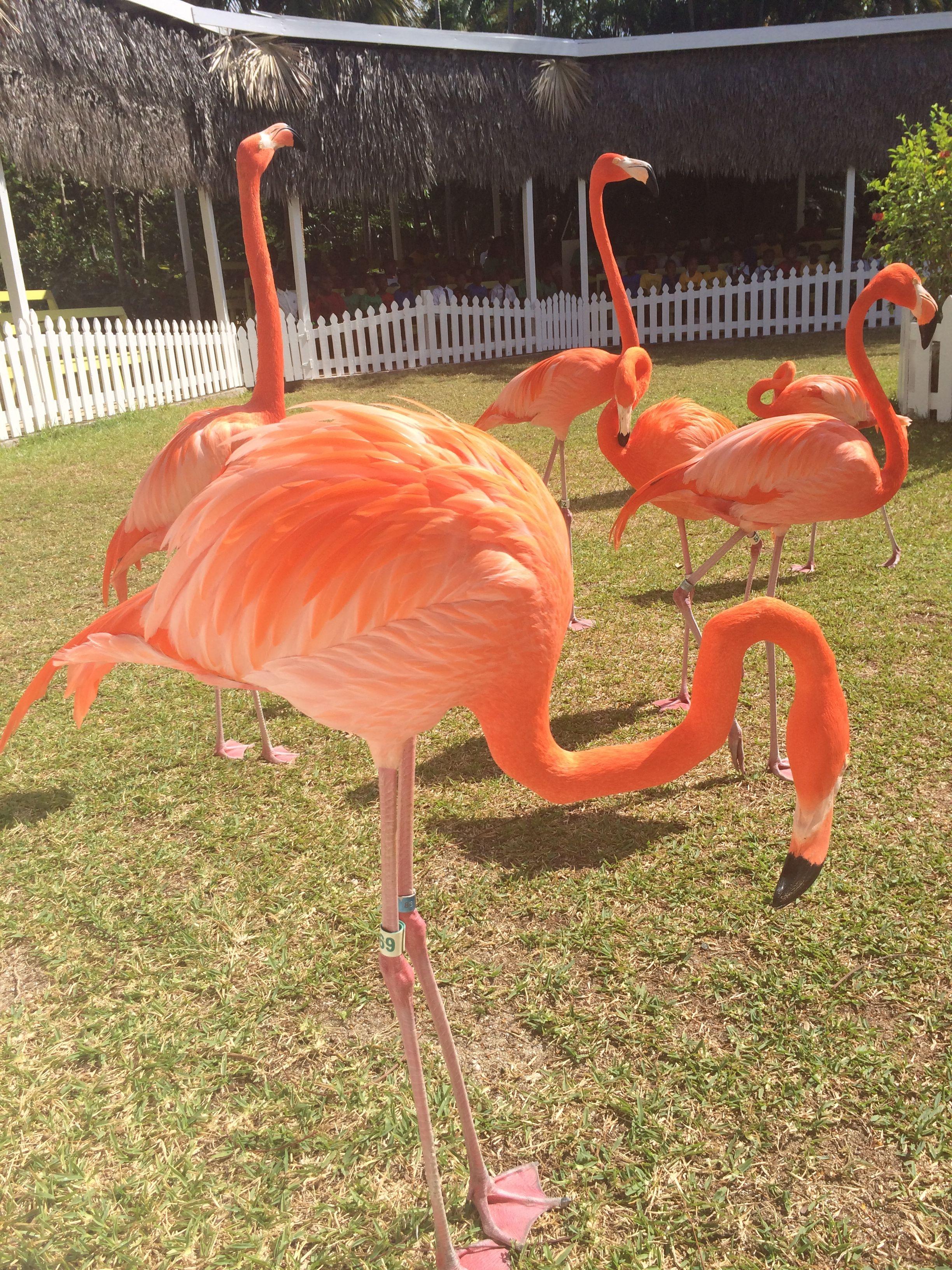 3eb94a8cfe384d0a589a9c2cffb6462b - Nassau Bahamas Ardastra Gardens And Zoo