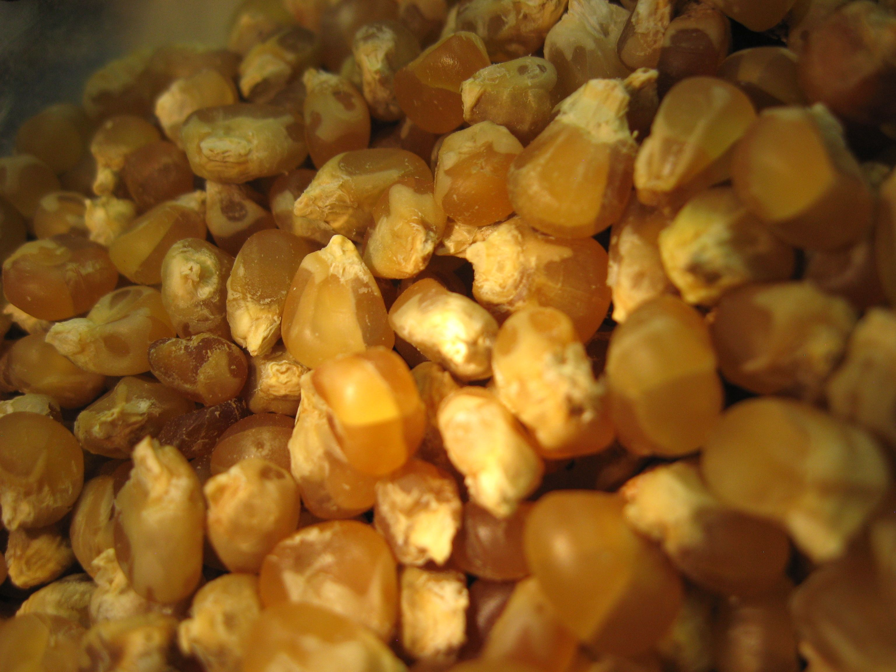 Dry Kernels Of Roasted Corn For Mutton Stew Food Roasted Corn