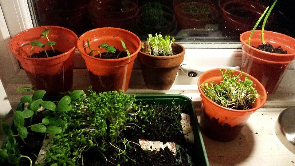 Indoor gardening diy- seeds to plants
