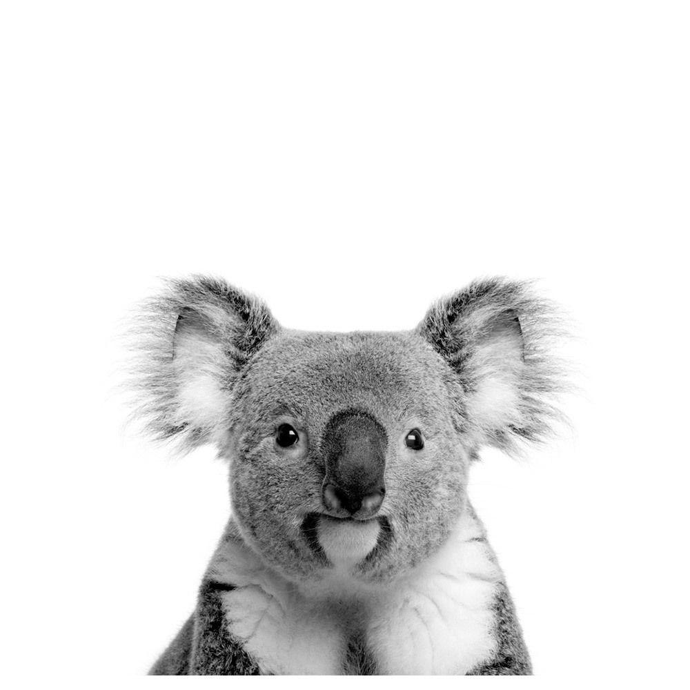 Oh Hi Koala Photographic Art Print Temple Webster Koala