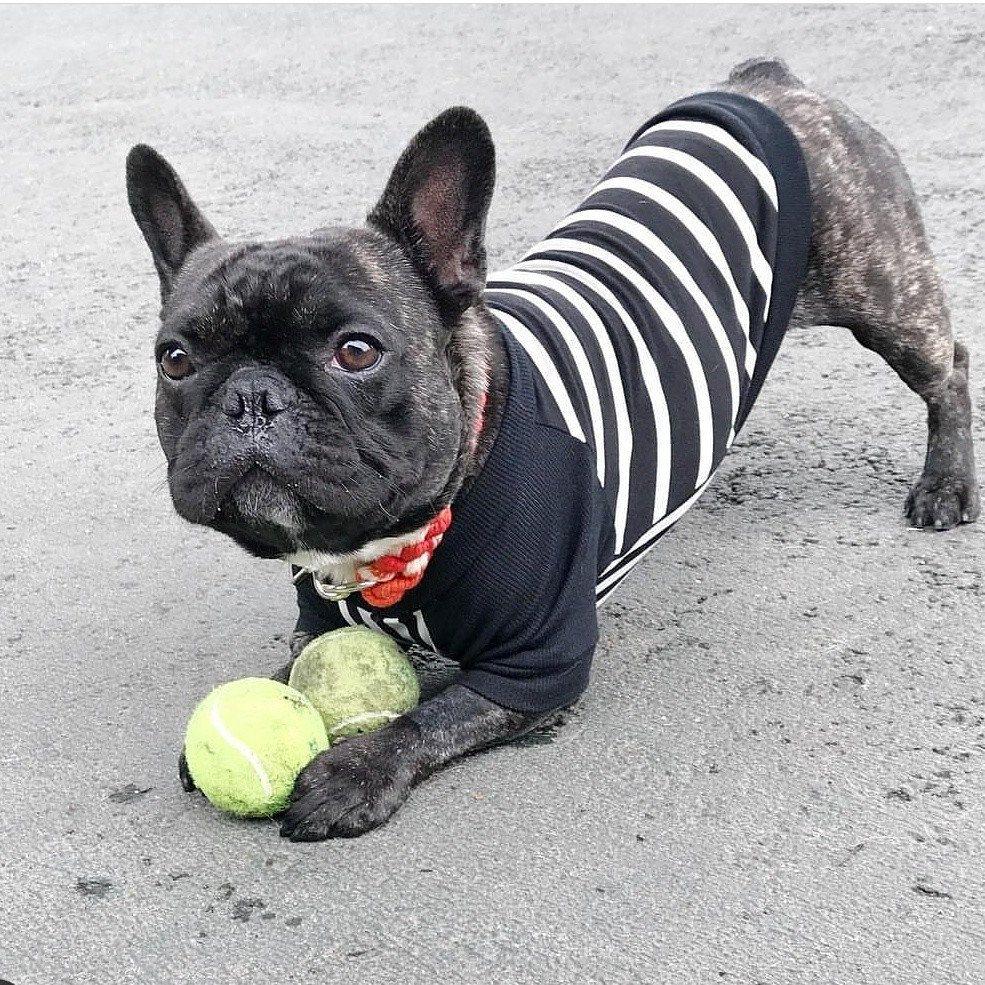 Orange Ombre Rope Dog Collar Cute French Bulldog French Bulldog