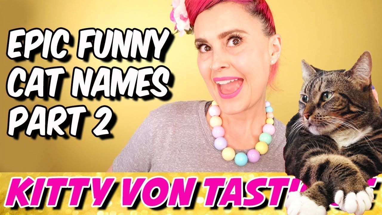 Cat Comedy Funny Epic Cat Nicknames Part 2 Kitty Von Tastique Funny Cat Names Funny Kitty