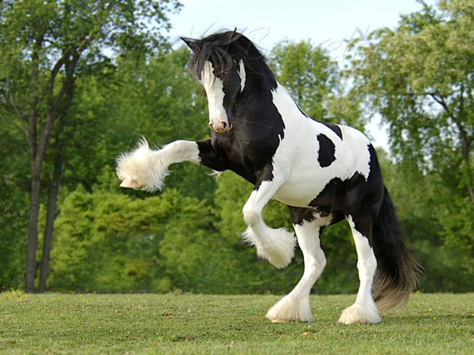 Images For Gt Beautiful Baby Horses Wallpaper 1600x1200PX
