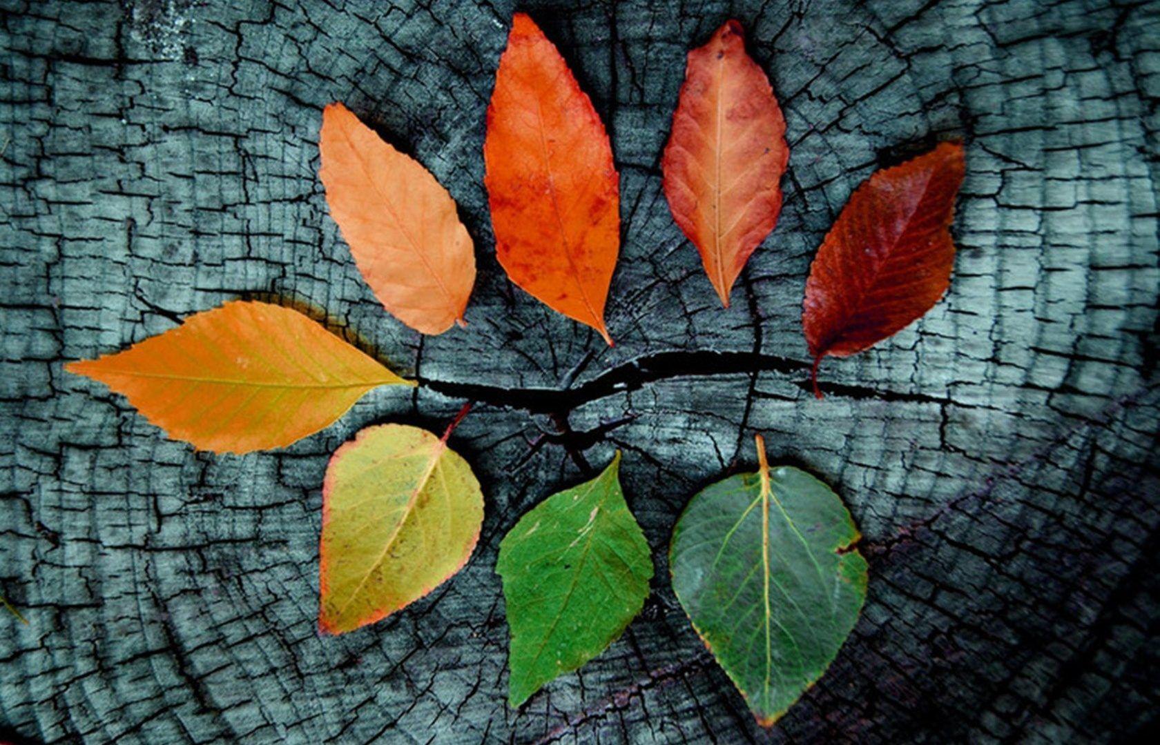 Fall Desktop Wallpaper Full Hd On Wallpaper 1080p Hd In 2020 Autumn Leaves Wallpaper Fall Wallpaper Winter Wallpaper Desktop