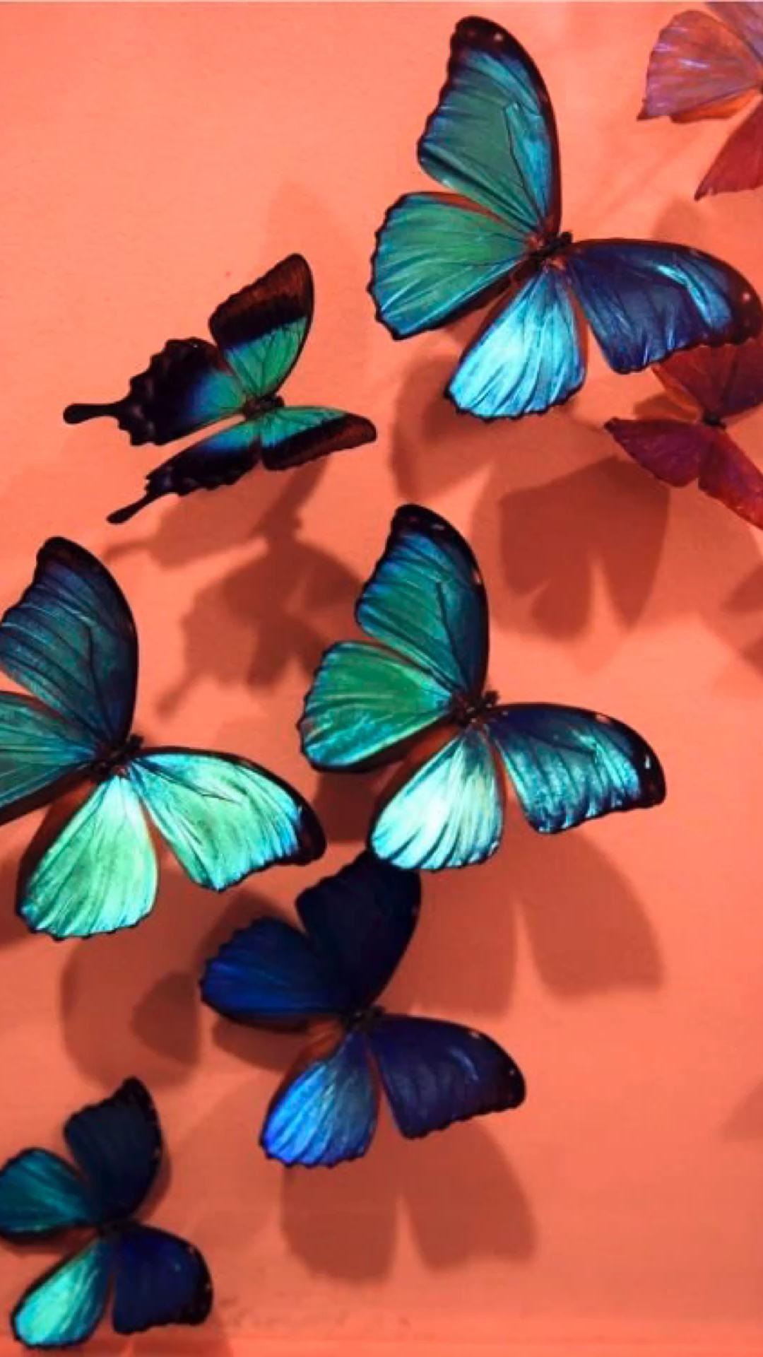 Wallpaper borboleta